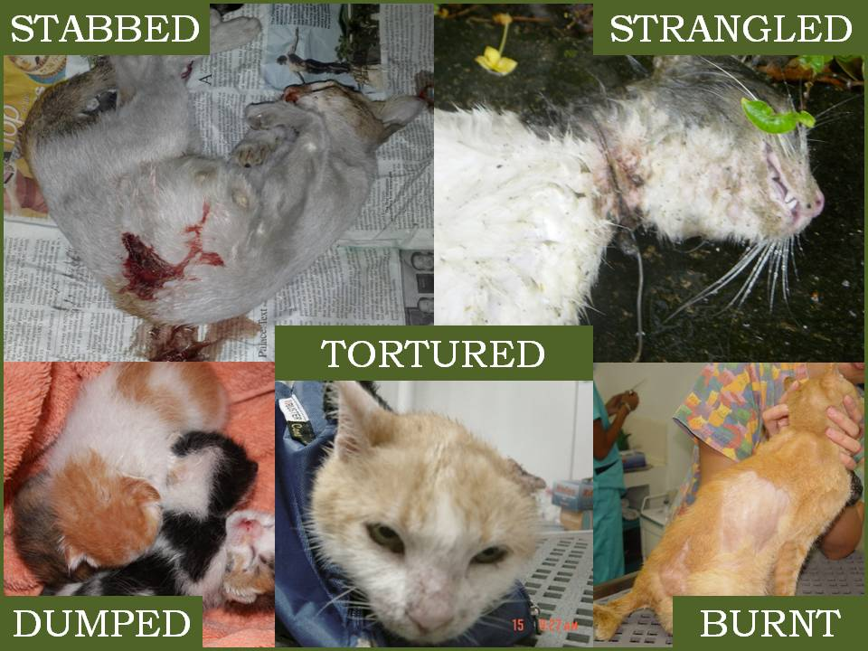 Stop Animal Abuse Cats