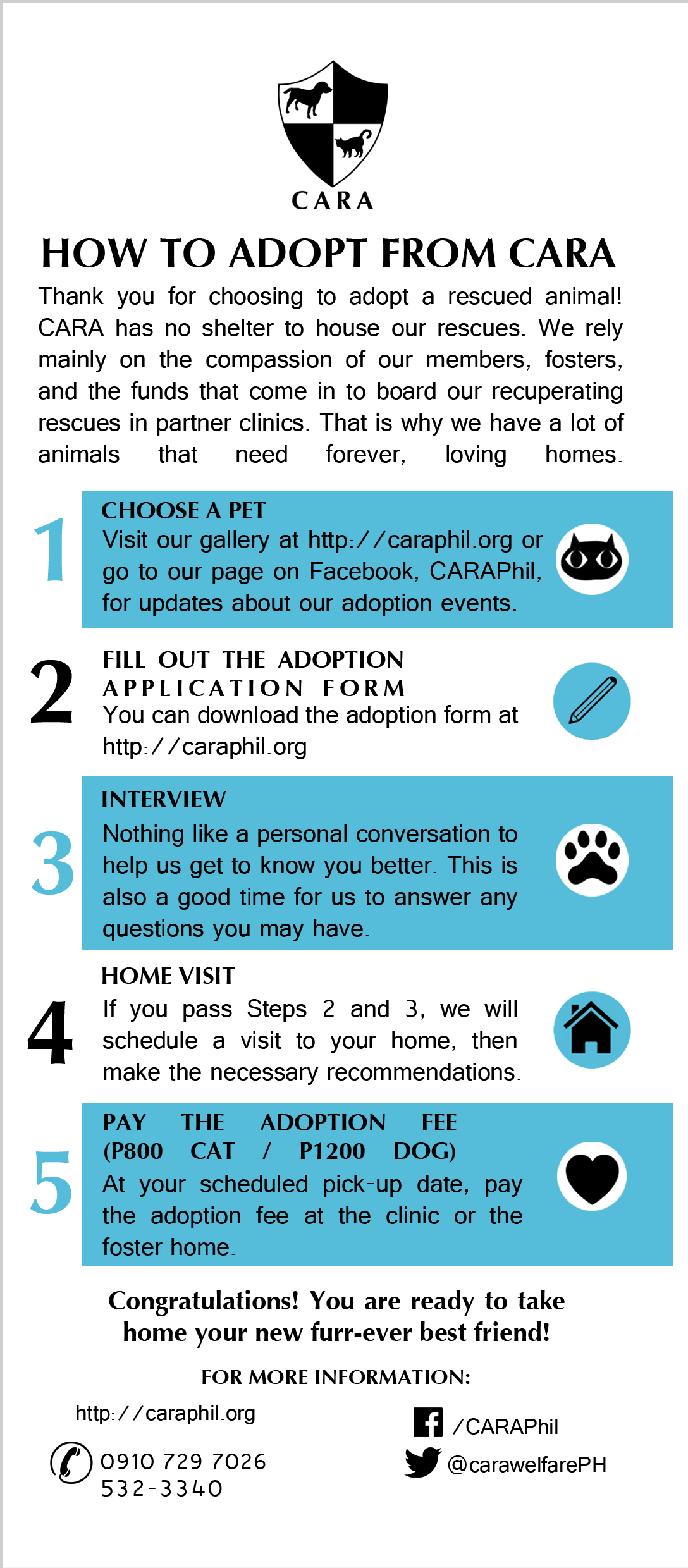 How to Adopt a Pet from CARA