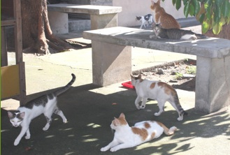 TNR colony in Manila