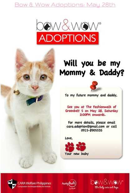 Adoption Event Update: 12 Cats adopted! May 28th, Bow & Wow, Greenbelt 5, Makati – 2pm onwards