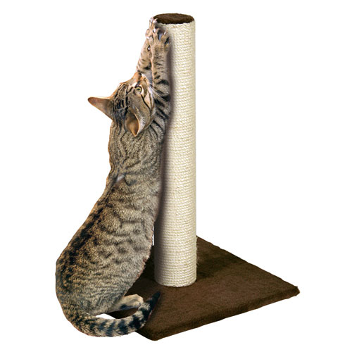 Cat Tip – Scratching Posts