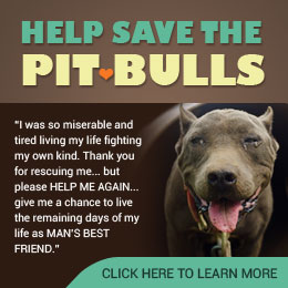Help Save the Pitbulls