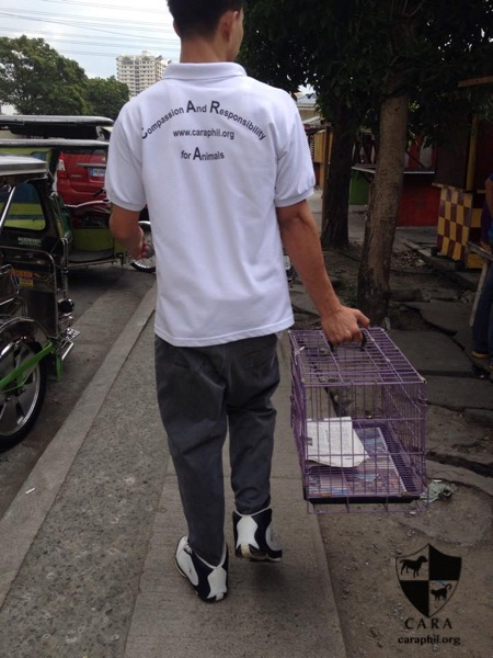 CARA Welfare Philippines - Animal Welfare - Trap Neuter - Taguig - TNR Project in Taguig Community
