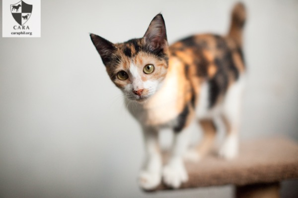 HEART is looking for her fur-ever home