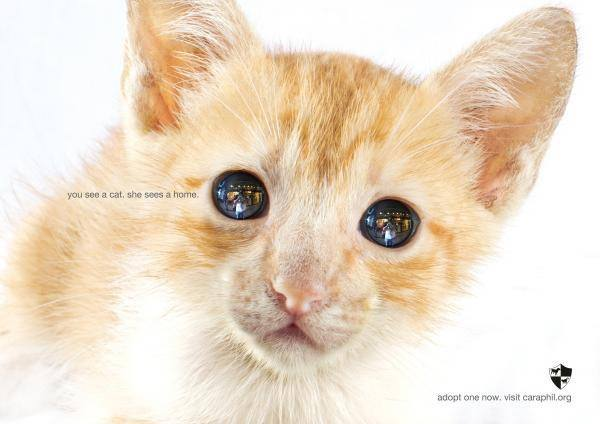 CARA - animal welfare - adopt a cat in the Philippines - animal blog in the Philippines