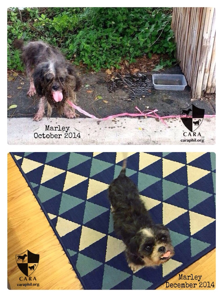 MARLEY, our Throwback Thursday girl, is up for adoption!