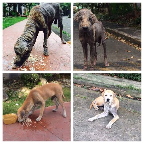 Stray dog gets a chance for a new life