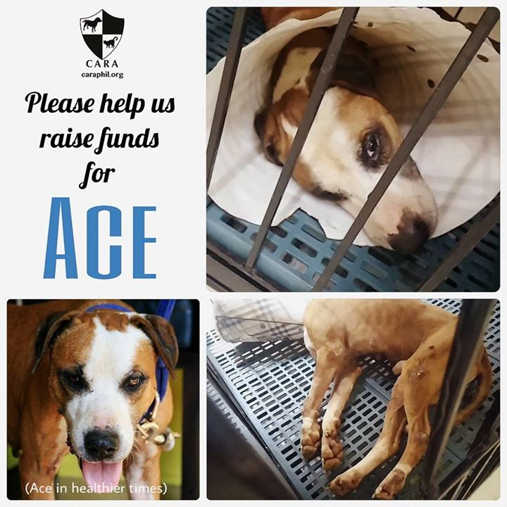#FundraisingFriday: Please help ACE, who has suffered so much already