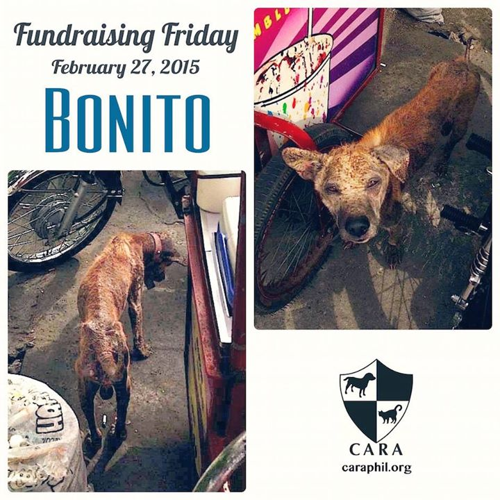 #FundraisingFriday: Please help Bonito, ravaged by mange and heartworm