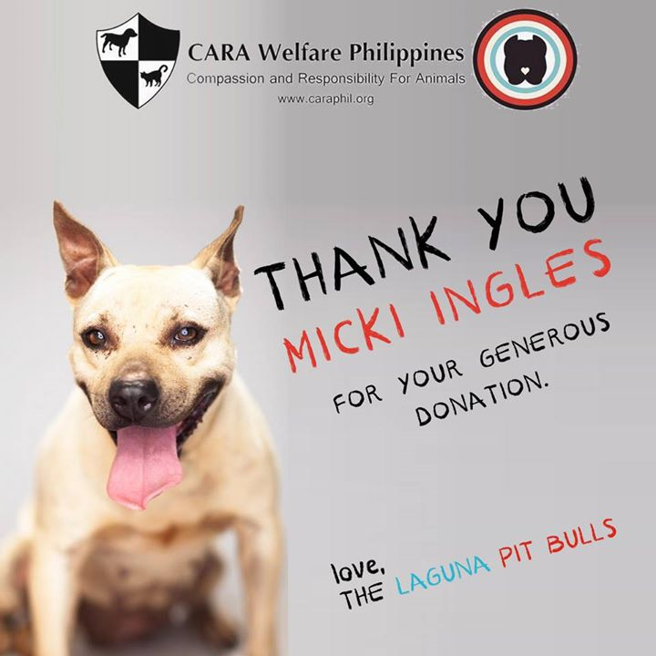 CARA - Animal welfare in the Philippines - Laguna Pit Bulls