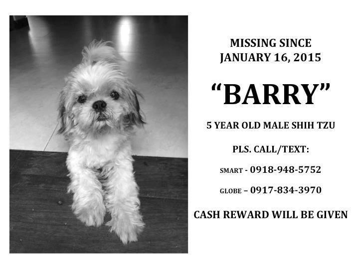 Lost Dog: Please help find Barry