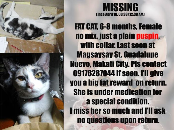 Lost Missing Cat Philippines - Fat Cat