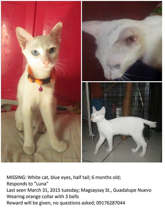 Lost Pet: Please help find Luna