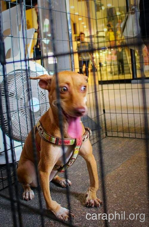 Peggy, Bina and other rescued dogs and cats wow mall-goers