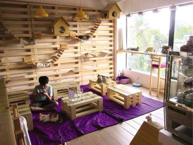 CARA Puspins and Cat Cafe featured in Philippine Daily Inquirer