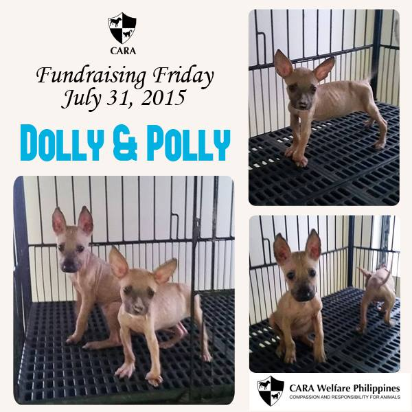 #‎FundraisingFriday‬ for Dolly and Polly, puppies rescued from an animal hoarder