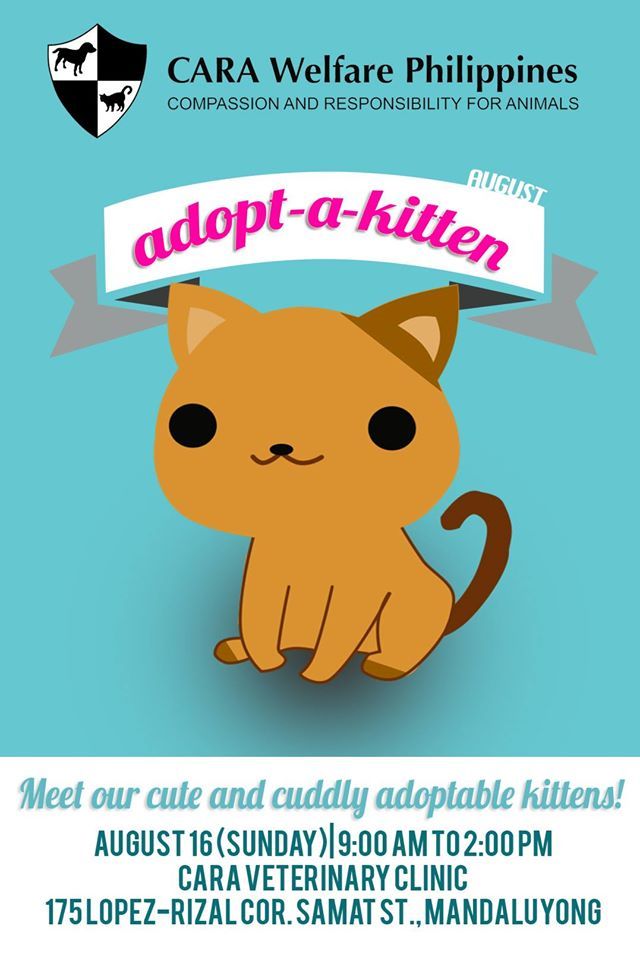 Meet our cute and cuddly adoptable kittens!
