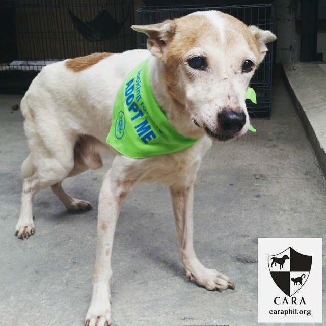 Do you have room in your heart for gentle Eddie?