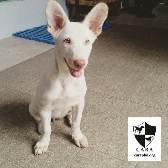 Looking for a playful puppy to love?
