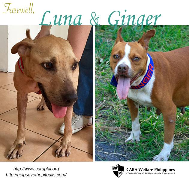 Across the Rainbow Bridge, farewell Luna and Ginger