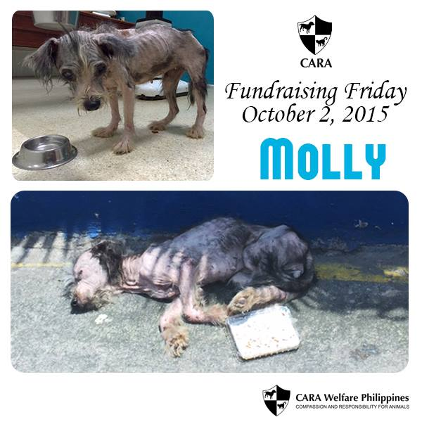 Fundraising Friday: Brave Molly