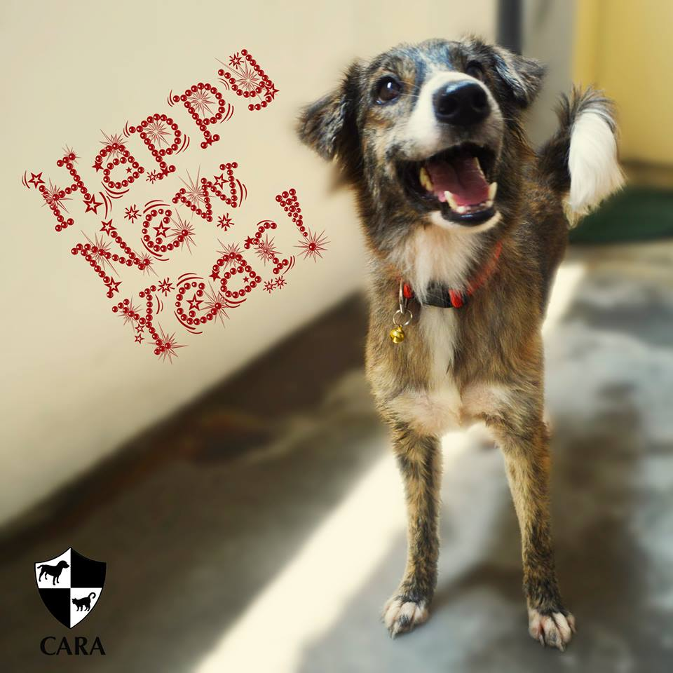 Happy New Year Pet Parents and Fur babies!