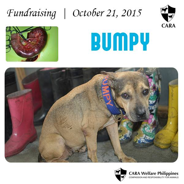 Fundraising Friday: Show Bumpy Some Love