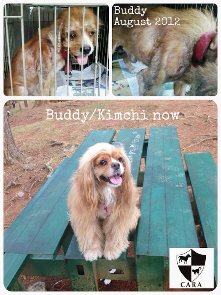 Kimchi Buddy - CARA rescued dog - animal welfare in the Philippines