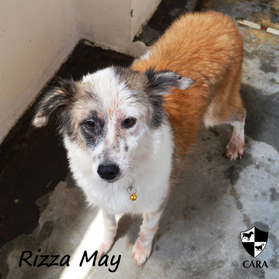 Rizza May - CARA rescued dog - pet for adoption - animal welfare in the Philippines