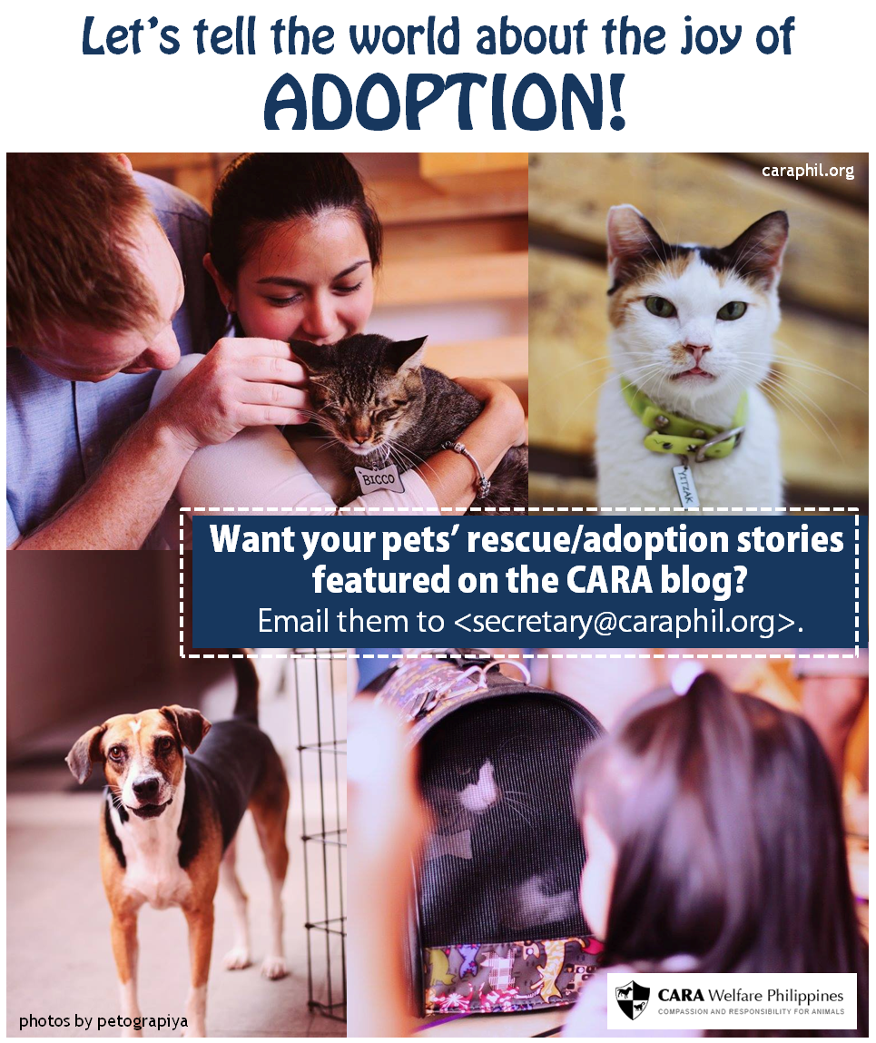Share Your Pet Stories on the CARA Blog