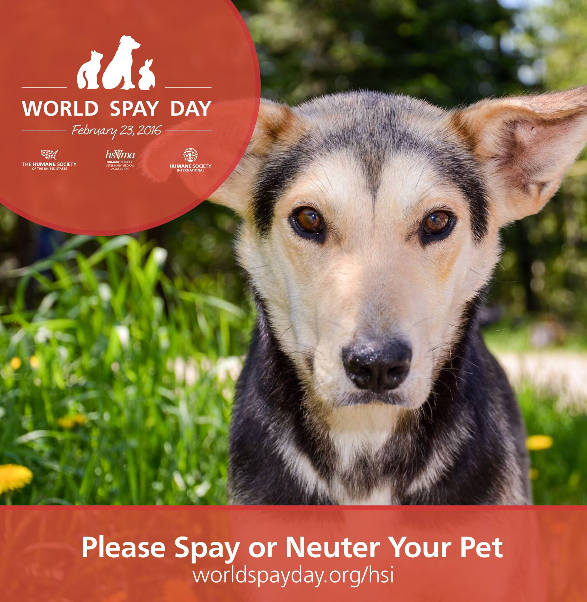 Today is World Spay Day!  How Can We Help?