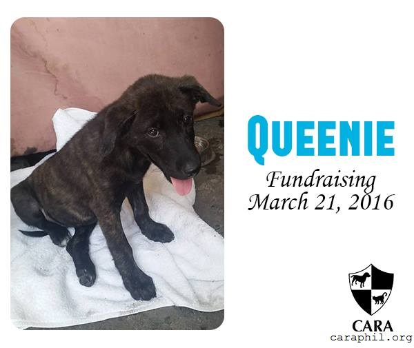 Queenie needs YOU!