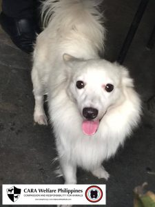 CARA-Male Dog-Lost Dog