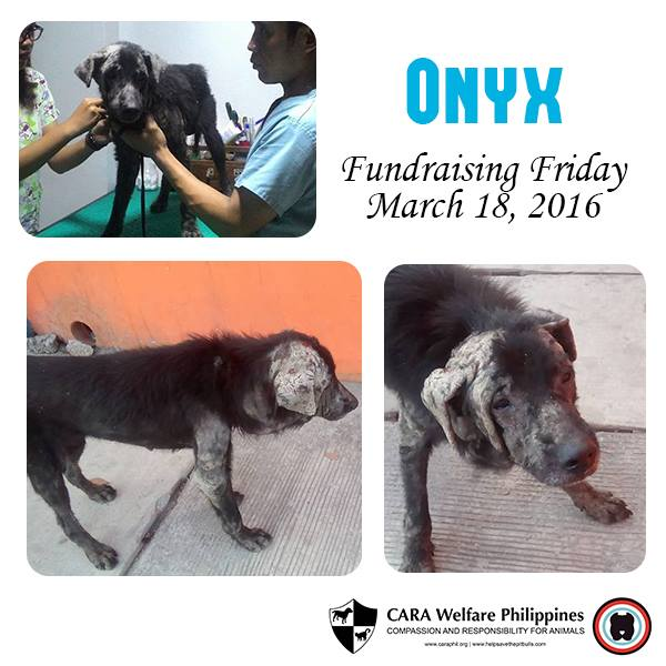 CARA - Animal Welfare in the Philippines - Onyx - Adoption2