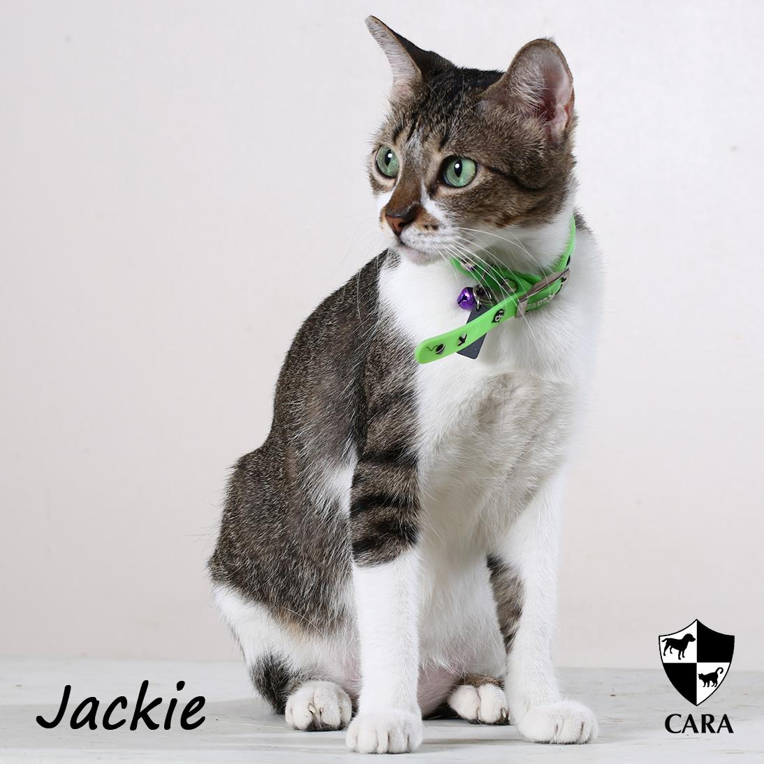 CARA Adoptables: Friendly Jackie
