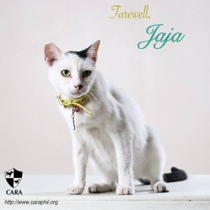 august-2016-rest-in-peace-jaja-counter-queen-rescue-caracat-adoptdontshopt-carawelfarephilippines