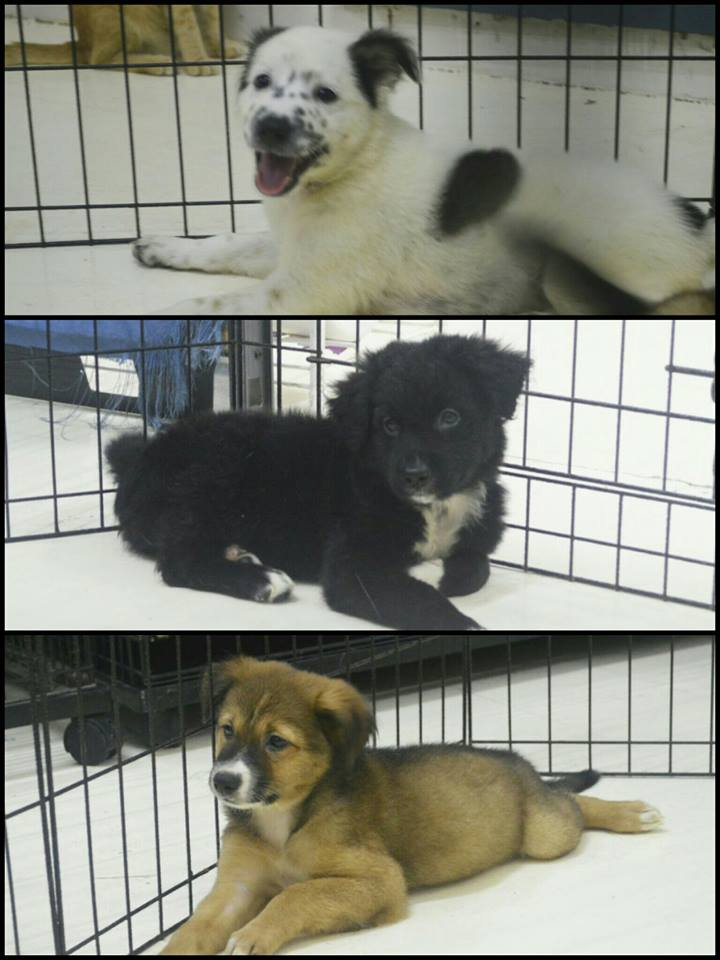 FEATURED ADOPTABLES: 3-Month Old Puppies!