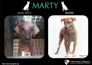 cara-animal-welfare-in-the-philippines-marty-before-and-after