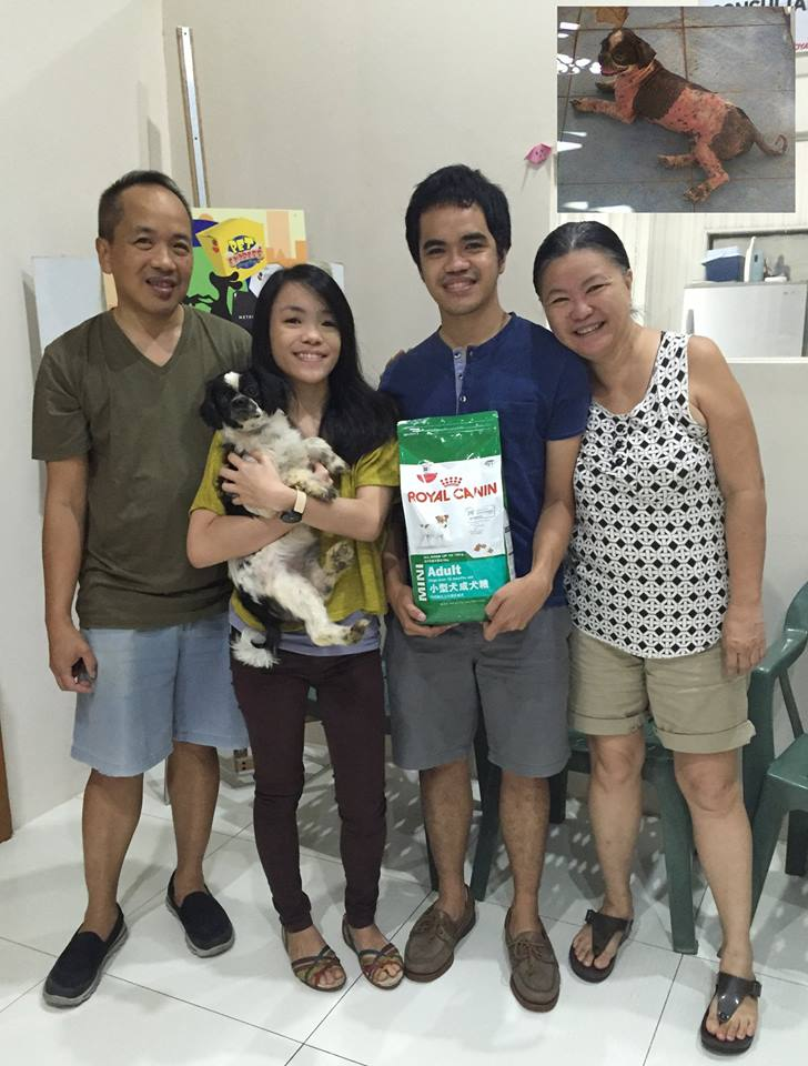 ADOPTED: Frankie the Shih Tzu