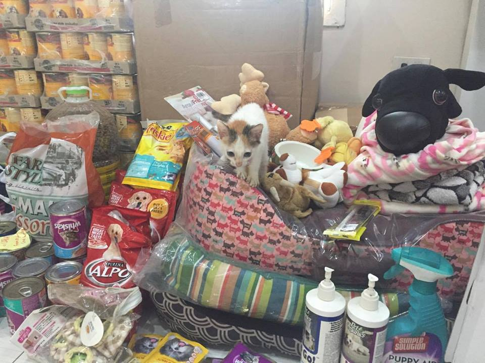 october-2016-donations-german-european-international-school-dora-caradogs-caracats-adoptdontshopt-carawelfarephilippines