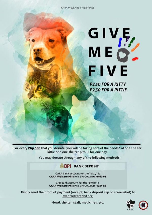 Help a Kittie and a Pittie!