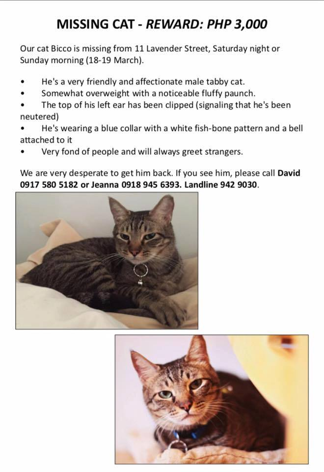 2017-March-Lost Cat-Bocci