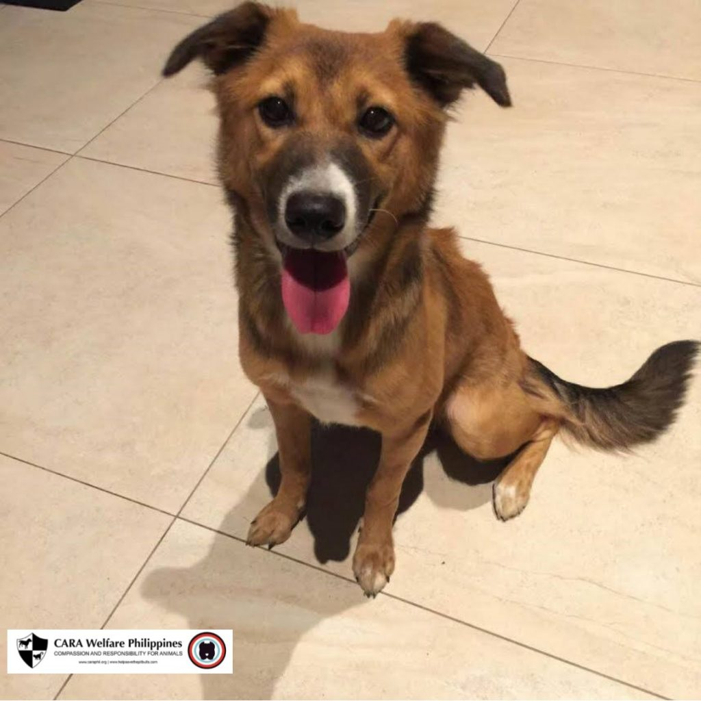 CARA rescued dog Chester