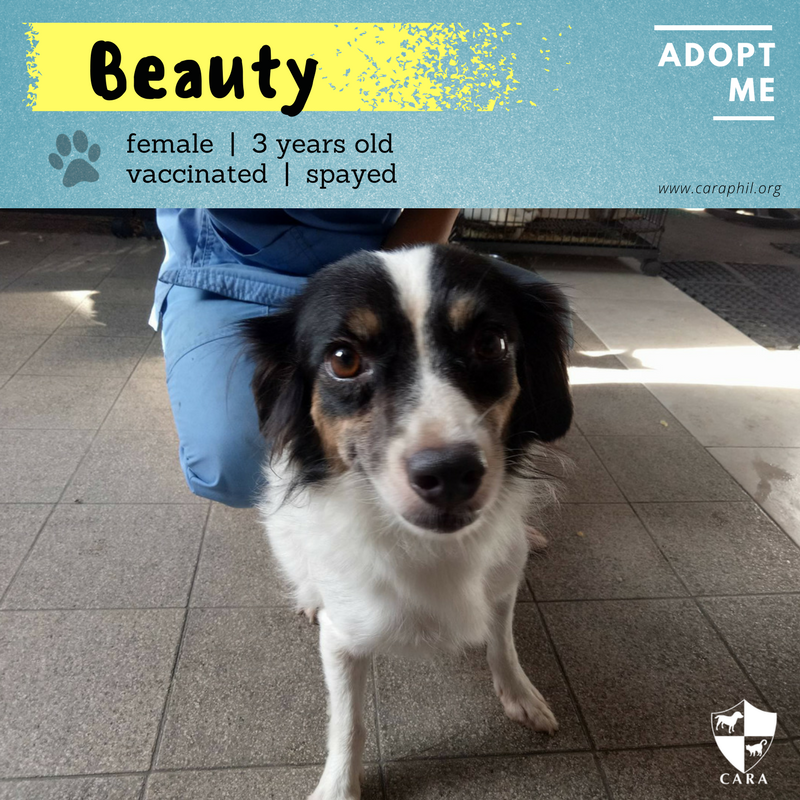 Adopt Me Please! – Beauty the Dog
