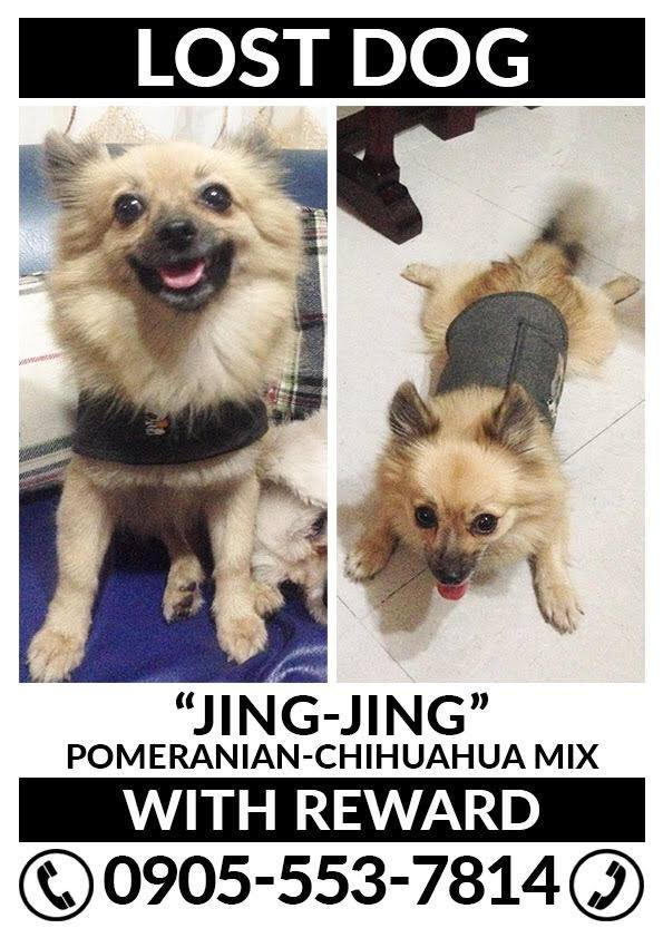 July-2017-Lost Pets-Jing Jing - Dog Fairview - missing