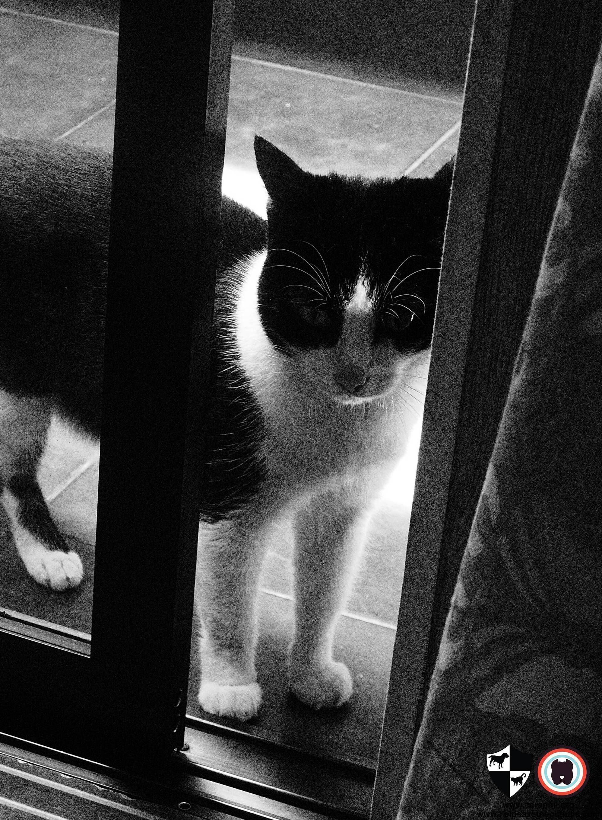 A Tribute to Figaro, this Lost Pet Prevention Month