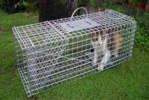 TNR of stray cats