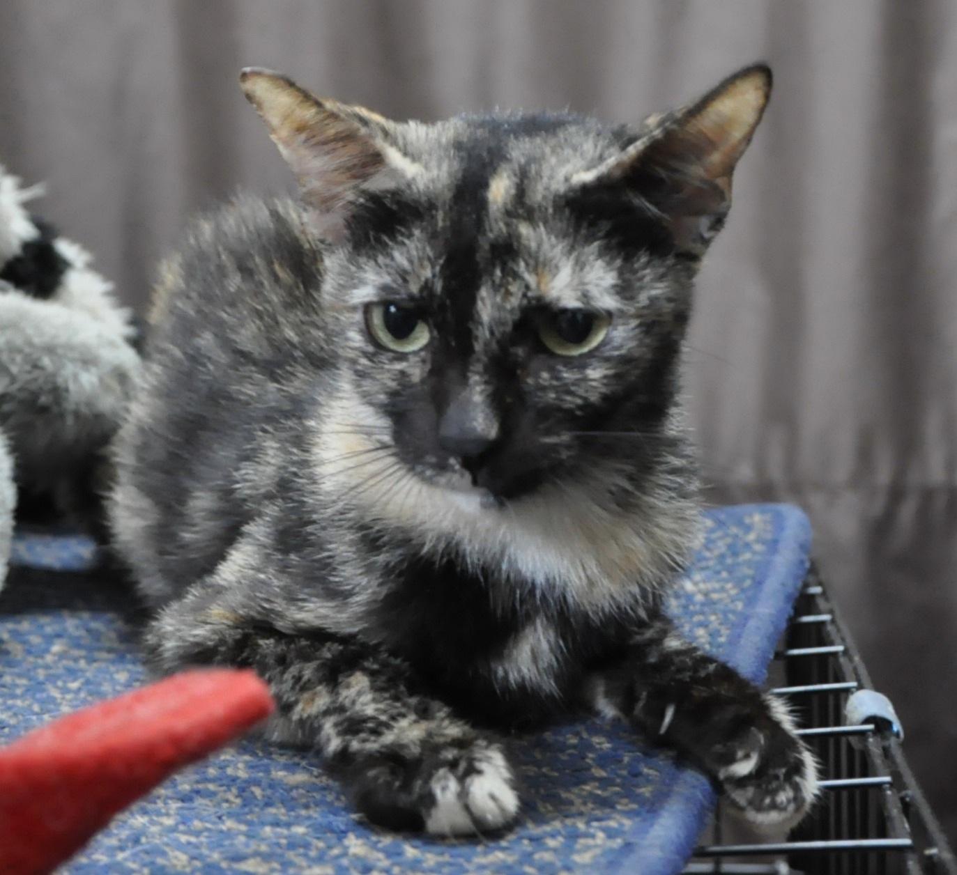 CAT adoption – Greenbelt 5, Makati on Saturday, November 26th…