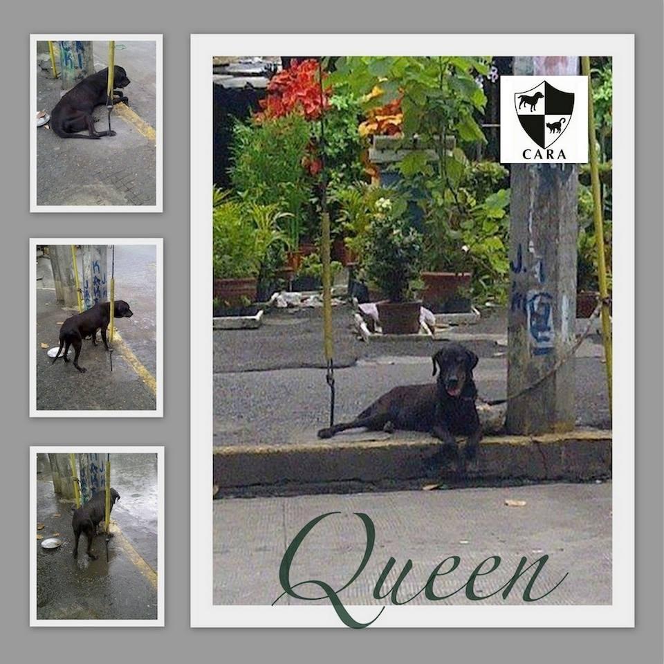Evils of Backyard Breeding have taken a Queen