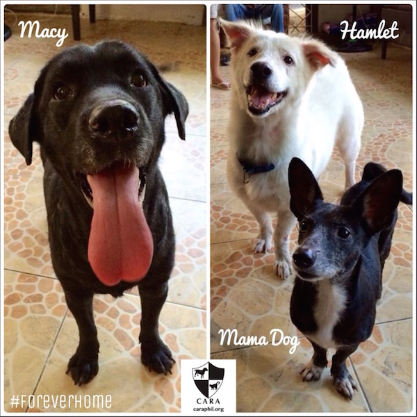 Macy, Hamlet and Mama Dog are adopted together!